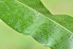 Rain leafs Stock Image