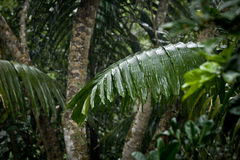 Rain on leaves, motion blur Royalty Free Stock Photography