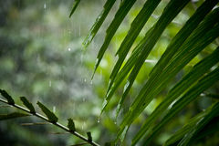 Rain on leaves, motion blur. Rain on leaves with motion blur of rain falling in the rainforest stock photo