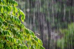 Rain leaves Stock Photo