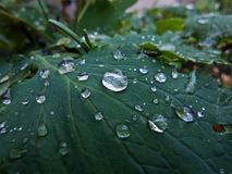 After rain. Light bright contrast clear clean garden plant rain drops deep green Royalty Free Stock Photography