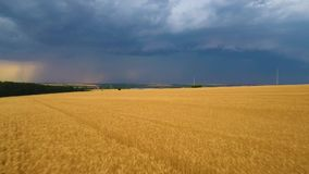 Lightning and rain far away on the horizon from the beautiful wheat field