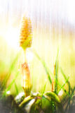 Rain on the meadow Stock Photography