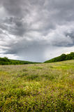Rain on the meadow Royalty Free Stock Photography