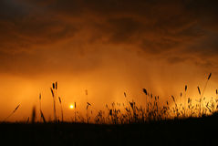 Rain on the meadow Royalty Free Stock Photo