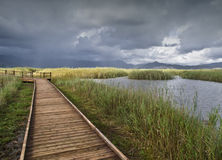 Rain in the Meadows. Landscape of a swamp area during a rainy day, with a wooden walkway used as a vanishing point Royalty Free Stock Photo