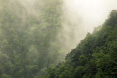 Rain in mountain forest Royalty Free Stock Photography