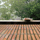 Rain on nature. Abstract background  brick wall floor. Or nature background Stock Image