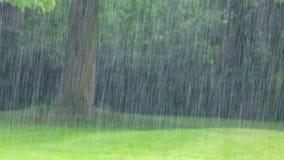 The Rain on Nature stock video footage