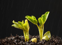 Rain and new plant sprouts Royalty Free Stock Images