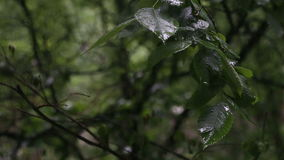The rain outside the window. Summer, rain in the city, spray of rain on the leaves of trees stock footage
