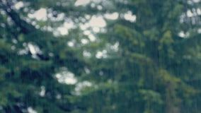 Rain Over Out Of Focus Trees stock footage