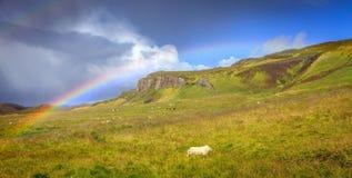 Rain over pasture stock image