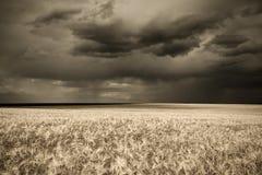 Rain over wheat field in retro style Royalty Free Stock Photo