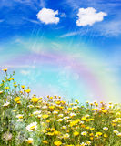 Rain over a yellow meadow. Summer or spring  nature background. Rain and rainbow on a meadow with yellow flowers Royalty Free Stock Photos