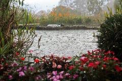 Rain på ett damm Arkivfoton