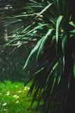 Rain in the palm grove Stock Photo