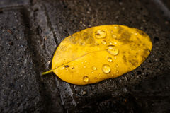 After the rain. Photograph of drops left on the leaf after the rain Royalty Free Stock Image