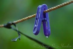 Rain. Pless Show Me The Photo Thank U Stock Image