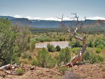 Rain Pond in Canyon Rims Recreational Area. Hard rains sometimes produce marsh ponds in the desert back country around Canyonlands National Park and Canyon Rims Royalty Free Stock Image