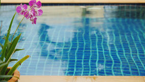 Rain in the pool against the foreground of a flower frangipani Royalty Free Stock Photos