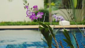 Rain in the pool against the foreground of a flower frangipani Royalty Free Stock Photography