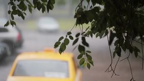 Rain pouring down on branches of a tree. Blurred car passing by and a taxi on the background. stock video