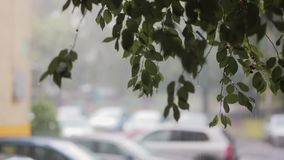 Rain pours down on branches of a tree. Blurred cars on the background. With sound. Rain pouring down on branches and leaves of a tree. Blurred cars on the stock footage