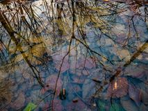 After rain reflection on puddle. Tree and sky in puddle reflection royalty free stock photos