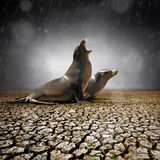 Rain Relief Royalty Free Stock Images