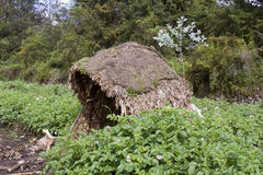 Rain shelter in potato field, Virunga, Rwanda. Grass protective hut in potato field in rural Virunga, Rwanda, Africa Royalty Free Stock Photos