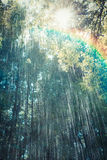 Rain Shower Rainbow Royalty Free Stock Image