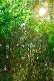 Rain Shower Trees Royalty Free Stock Images