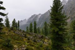 Rain in a Siberian mountain woodlands Royalty Free Stock Photos