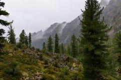 Rain in a Siberian mountain woodlands royalty free stock photos