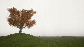 Rain Singl autumn tree on a meadow. Rain Singl autumn tree on a green meadow stock footage