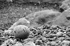Rain spattered round stone on the beach, Cape Sutil, Vancouver Island, British Columbia. Royalty Free Stock Image