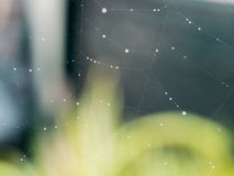 Rain on a Spider Web. Stock Photography
