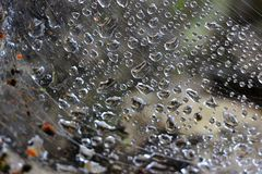 Rain in Spiderweb Royalty Free Stock Images