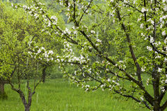 Rain in spring garden Stock Images