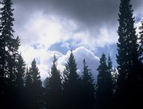 Rain Storm. S Umatilla national forest Royalty Free Stock Photography