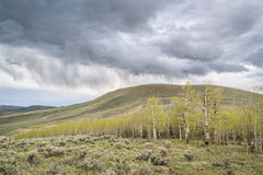 Rain and storm clouds over aspen grove Royalty Free Stock Image