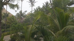 Rain storm palm trees. Gray sky stock video footage