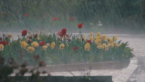Rain Storm in the Park stock footage