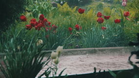 Rain Storm in the Park. Heavy rain, storm, downpour in the park. Different Flowers tulips in the flower beds under heavy rain. Raindrops are falling on the stock video footage