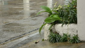 Rain storm on plant Royalty Free Stock Images