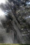 Rain Storm on Trees with Sunlight. Rainstorm on trees with sunlight deluge major water Stock Photography