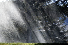 Rain Storm on Trees with Sunlight. Rainstorm on trees with sunlight deluge major water Stock Images