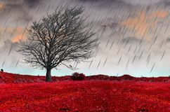 Rain stort in autumn winter season tree clouds bad weather. Background royalty free stock photography