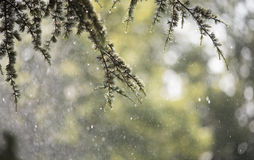 Rain in summer day with bokeh effect. Rainy day with bokeh effect in the summer Stock Photography